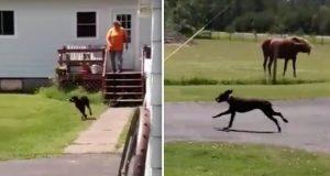 Det er dagens høydepunkt for denne hunden (og hesten) – SE bare hva den herlige hunden gjør.
