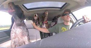 Oppstemte hunder bryter ut i sang når de skjønner at de skal til favorittstedet sitt.