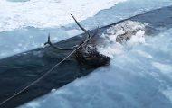 Hjorten frøs nesten ihjel i det iskalde vannet – da redningen kom fra uventet hold.