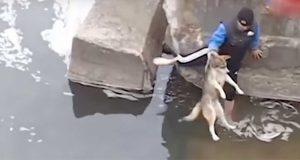 Den ukjente mannen redder hunden fra vannet. Men sjekk hva hunden gjør like etter…