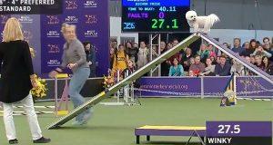 Morsom hund tok bedagelig fatt på smidighetskurset og vant nye fans på Westminster hundeshow.