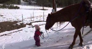 Den lille jenta vikler seg fast i seletøyet – hestens reaksjon smelter hjertet mitt.