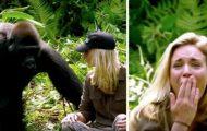 Hun trosser advarslene og går for nær gorillaen som mannen hennes oppdro for 6 år siden…