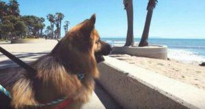 Hunden var fastlenket hele livet og ble forlatt – ser sjøen for første gang og reaksjonen går viralt.