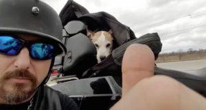En biker ser en liten hund bli mishandlet på veien og kjører til siden.