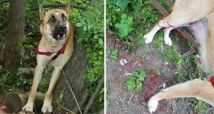 Hunden ble funnet fastlenket blant avfall i skogen. Da oppdager de den grusomme sannheten.