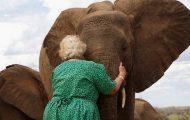 Foreldreløse elefanter stiller seg i kø for å gi klem til kvinnen som reddet livene deres.