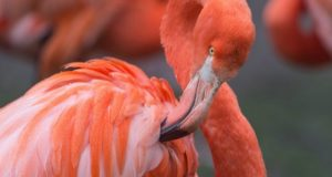 En flamingo måtte avlives etter at en unge kastet stein på henne.