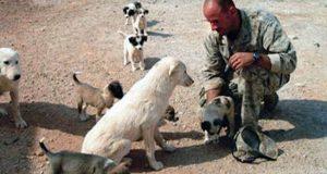 Marinesoldat nekter å forlate lojal løshund i Irak.