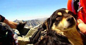 Klatrere redder på heroisk vis en hund som var blitt forlatt på Polens høyeste fjelltopp.
