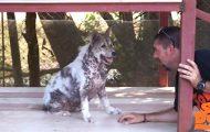 Hund gjør en «glad-dans» idet han skjønner han blir adoptert etter 4 lange år.