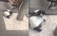For 3 år siden mistet han hunden sin. Så ser han noe på gaten…