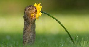 Fotograf foreviger dyrebart øyeblikk av et ekorn som forsiktig lukter på en blomst.