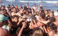 Truet baby-delfin dør etter at turister drar den ut av havet for å ta selfies.