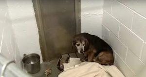 Savnet hund måtte leve på gaten i 2 år – se reaksjonen når han hører eierens stemme igjen.