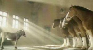Lite esel ønsker å være en Clydesdale-hest – forklarer saken sin i video som får nettet til å vri seg av latter.
