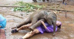 Kvinne har «sitt livs beste øyeblikk» når en elefantbaby overøser henne med kos.