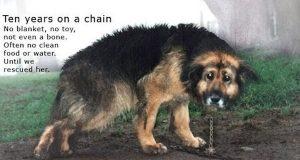 De neglisjerte hunden på det groveste og døpte henne Judas. Etter 10 år i lenke, blir hun reddet.