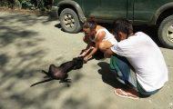 Løshund kollapser og begynner å gråte når hun innser at mennesker har kommet for å redde henne.