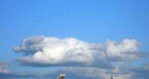 Folk legger merke til hundeformede skyer. Mener det er bevis på at hunder reiser til himmelen.