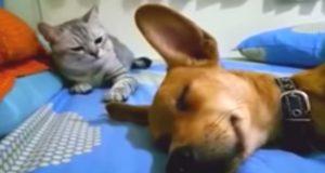 Hunden fjerter i søvne, og kattemakkeren hans er ikke tilfreds.