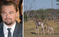 Skuespilleren Leonardo DiCaprio donerer 140 millioner til å redde truede dyrearter.