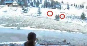 Kvinne roper hjort frem til dørstokken.