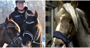 Tina fant hesten sin i en blodpøl i hagen – «Noen har forsøkt å skjære over halsen hans!»