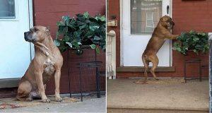 Hunden ventet på verandaen i ukesvis etter at familien hans flyttet bort.