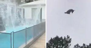 Gris kastes ned fra helikopter i millionærs basseng – bare for en forferdelig grusom spøk.