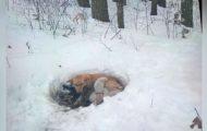 Hundemor fant ikke ly for valpene sine i snøen. Da tok hun saken i egne labber.