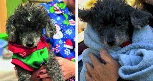 Paret vil at veterinæren skal avlive deres friske hund – fordi de anser den som «dum»