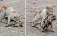 Katt sleper på sin venn over gaten. Akkurat da innser vitnet den fryktelige sannheten.