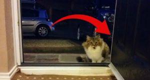 Hjemløs katt tigger og vil komme inn. Det viser seg snart at hun ikke er alene.