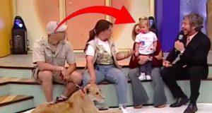 En løve og en baby er begge gjester på et tv-program – da går det fryktelig galt.