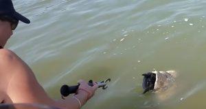 Mannen ser gigantfisk svømme vilt mot båten – ser noe i munnen og handler lynraskt.