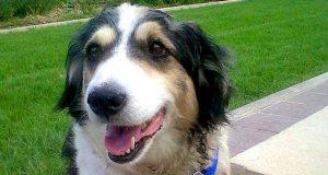 Denne gamle hunden ble skutt 40 ganger og begravd levende. Heldigvis ble hun reddet i siste liten.