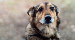 Nå vil Kina få orden: Utlover dusører til de som dreper løshunder.
