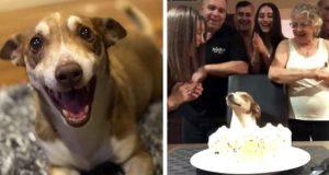 Seniorhund er så glad for at folk husket bursdagen hans!