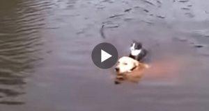 Hunden ser en katt som holder på å drukne. Da gjør han noe som får hjertene våre til å smelte.