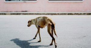 Sultende hund ble reddet av fotograf – gjør en utrolig reise til bedringens vei.
