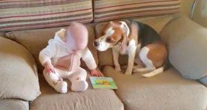 De lar datteren være alene med hunden, filmer hans reaksjon og blir helt lamslått.