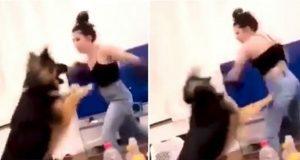 Video viser hvordan kvinnen «bokser» hunden sin i hodet – etterforskes nå for dyremishandling.