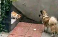 Rørende øyeblikk der hund gir sulten katt maten sin etter at han så henne i hagen.