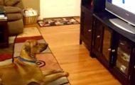 Hunden ser noe merkelig på TV – da fanger kameraet den hysterisk morsomme reaksjonen.