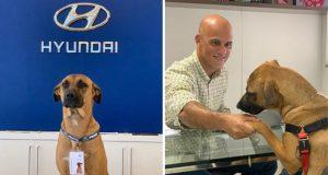 Bilforhandleren adopterer – og gir jobb til – hund som besøkte dem hver dag.
