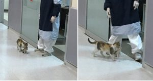 Hjemløs katt frakter sin syke kattunge til sykehus – da strømmer legene til for å hjelpe.