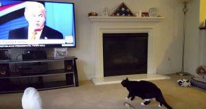 Eierne sitter og ser Donald Trump på TV – se kattens hysterisk morsomme reaksjon.