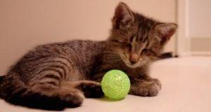 Blind kattunges uvurderlige reaksjon etter at han blir gitt leker for første gang.