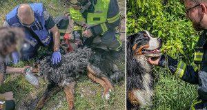 Brannvesenet redder livet til en hund som ikke kan unnslippe fra brennende hus